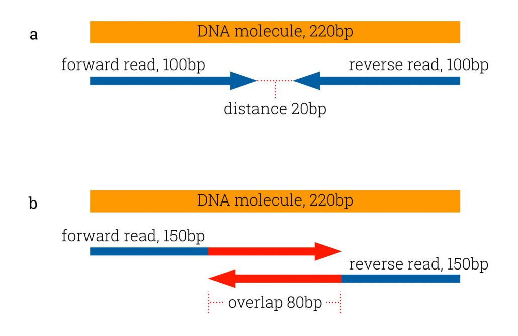 longer read lenghts lead to overlapping ends and wasted sequencing capacity.